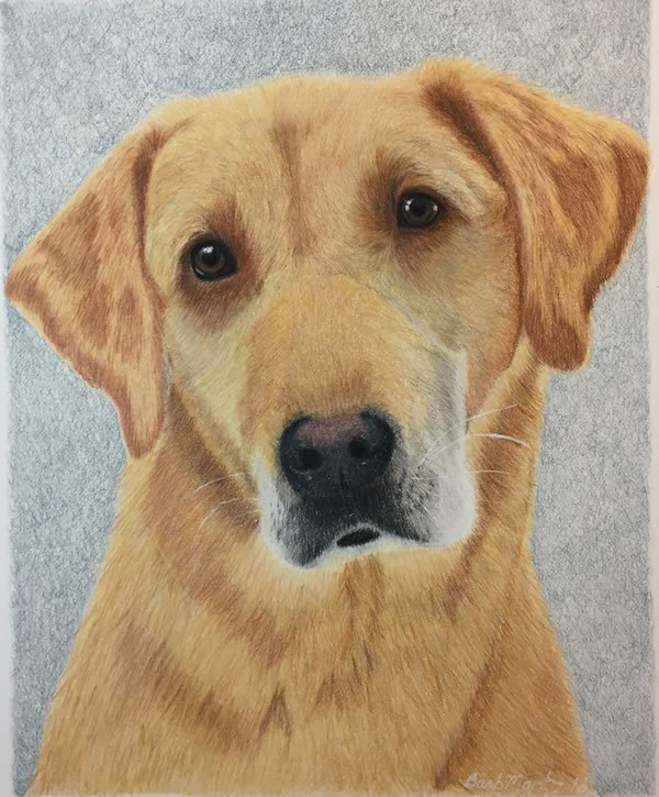 Yellow Lab Final